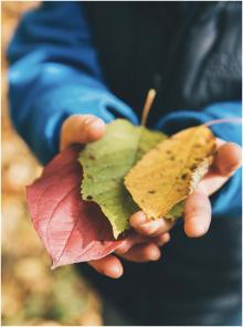 leaf1-80